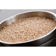 InHarvest Short Grain Brown Rice, 25 Pound -- 1 each