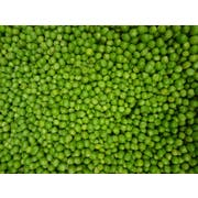 Commodity Canned Fruit and Vegetables 4 Sieve Sweet Fancy Peas, Number 10 Can -- 6 per case