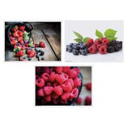 Hoffmaster 3 Designs Berry Delight Paper Placemat, 10 x 14 inch -- 1000 per case.