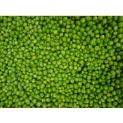 Commodity Canned Fruit and Vegetables Extra Standard 4 Sieve Peas, Number 10 Can -- 6 per case