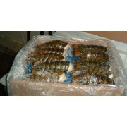 Frozen Seafood Canadian Lobster Tail, 10 Pound -- 1 each.