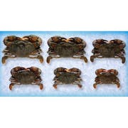 Handy Seafood 6.5 Ounce Soft Shell Super Colossal Imported Wild Caught Crab -- 24 per case.