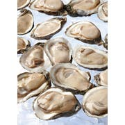 Handy Seafood Gulf Coast 1/2 Shell Oysters -- 144 per case.