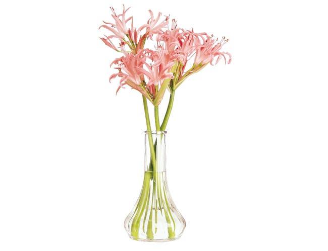 Cambro Plastic Bud Vase, Clear, 6 inch -- 12 per case.