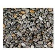 Unfi Black Chia Seed, 25 Pound -- 1 each.